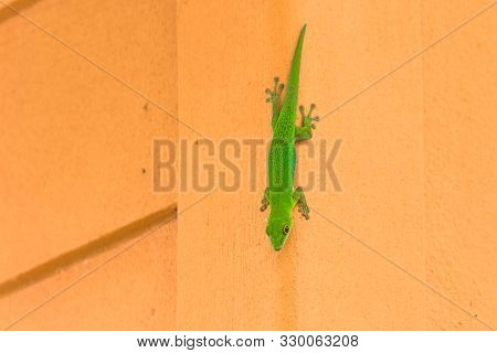 A Small Green Lizard On A Wall