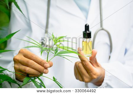 Glass Bottle Handle, Cbd Hemp Oil. Doctors Or Researchers Hold A Bottle Of Hemp Oil. Background With