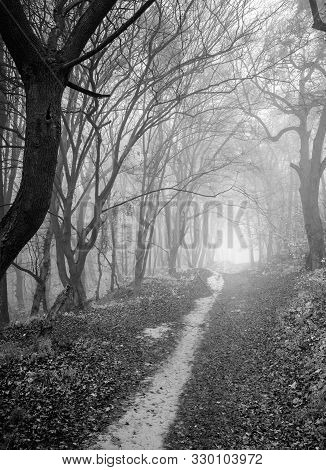 A Mysterious And Quiet Day In The Forest With Fog. Autumn Weather, Damp And Low Temperature. Fairy O