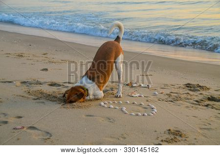 Canine Activities. Atractive Colourful Dog Portrait On A Ocean Beach Digging A Hole In The Sand. Tha