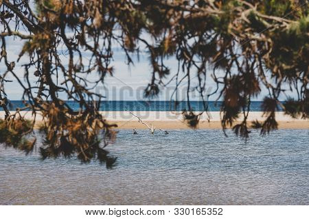 Australian Beach Landscape With Tree Branches In The Foreground