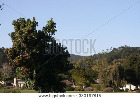 This Is An Image Of A Tree Taken On A Late Afternoon In Carmel,california.