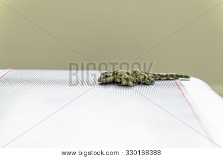 Stuffed Toy Lizard With Green Spots Mimicking Camouflage On Top Of A Table