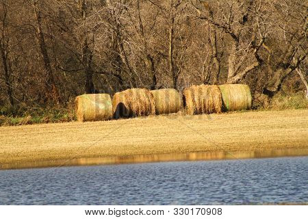 Some Large Round Hay Bales Against A Tree Line During A Fall Setting.