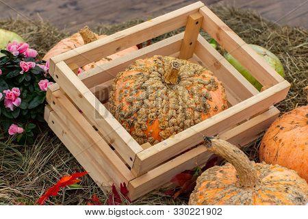 Patchy Zombie Pumpkin In A Wooden Crate At A Harvest Festival. Ripe Unusual Farm Pumpkin, Original A