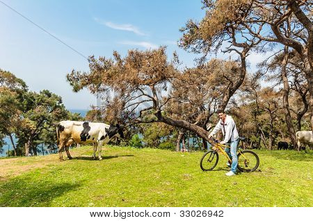 Man, Cow and bicycle on Prince's islands poster