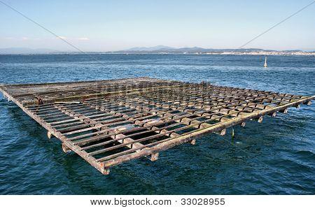Raft culture of mussels