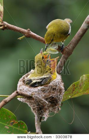 Feeding Time
