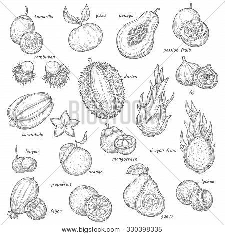 Exotic Fruit And Berry Sketches. Vector Tropical Orange, Papaya And Fig, Carambola, Feijoa And Lyche
