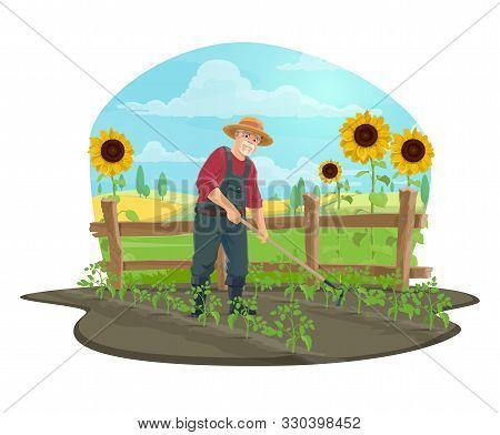 Farmer Hoeing And Weeding Soil With Garden Draw Hoe In Vegetable Garden Of Farm Vector Design. Beard