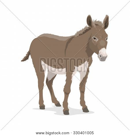 Donkey Or Mule, Farm Animal Of Horse Family Vector Design. Ass Or Burro Mammal With Grey Fur And Man