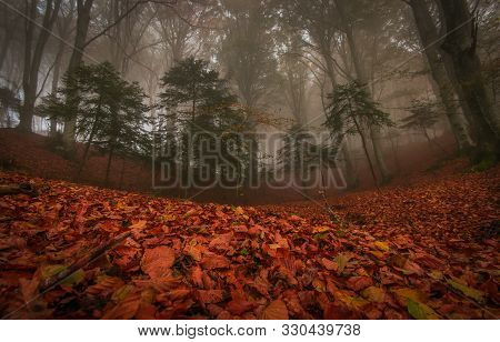 Beautiful Autumn Foliage In The Park Of Monte Cucco In The Umbria Region. Dark And Mystique Forest W