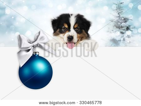 Merry Christmas And Happy New Year Gift Card, Puppy Pet Dog With Blue Christmas Ball With Silver Rib