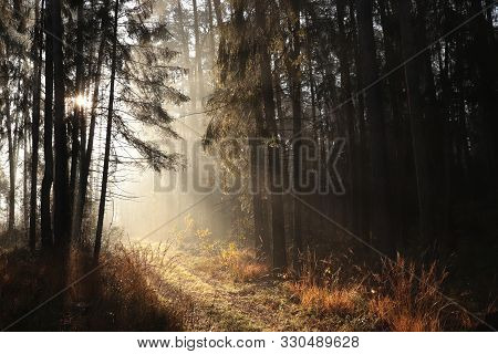 Trail coniferous forest at sunrise fog mist Nature landscape Nature background. Path forest Nature Sunny autumn forest. Road in outdoor Pine trees at sunrise. Nature background Nature environment branch trees in autumnal woods. Nature Sunshine Sun rays.