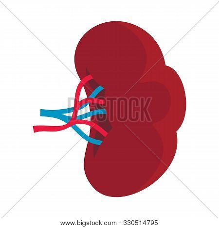 Body Part Spleen Flat Icon. Vector Body Part Spleen In Flat Style Isolated On White Background. Elem