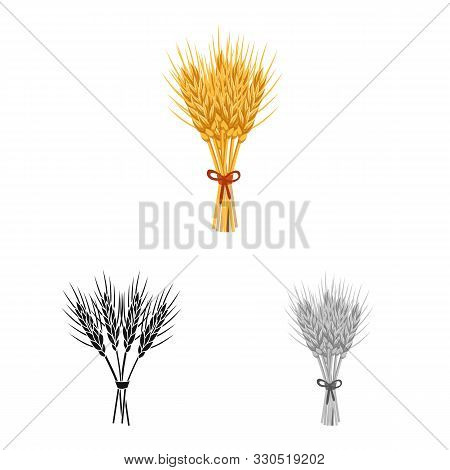Vector Design Of Barley And Sheaf Icon. Collection Of Barley And Malt Vector Icon For Stock.