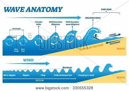Wave Anatomy Vector Illustration. Water Movement Physics Explanation Scheme. Educational Circular Or