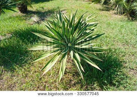 Small Palm Tree On A Background Of Green Lawn, Top View.