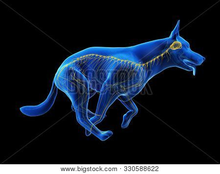 3d rendered medically accurate illustration of a dogs nervous system