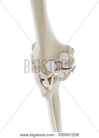 3d rendered medically accurate illustration of the ligaments of the knee
