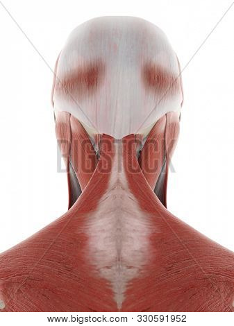 3d rendered medically accurate illustration of the nerves and muscles of the head