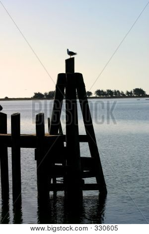 Seagull On Dock Piling