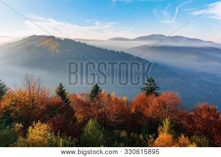 Misty Sunrise In Carpathian Mountains. Amazing Nature Scenery In Fall Season. Trees In Red And Orang
