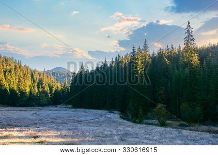 Beautiful Mountain Landscape At Sunrise In Autumn. Spruce Forest On The Meadow In Frozen Grass. Sunn