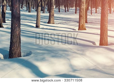 Winter sunset landscape with snowy winter trees in the winter park and white snowdrifts on the foreground. Colorful winter park in sunset winter light. Winter morning background, winter sunny scene