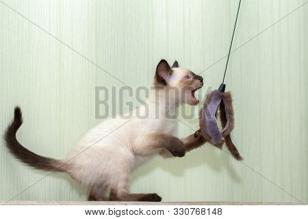 The kitten plays with a fur toy and stands on its hind legs. poster