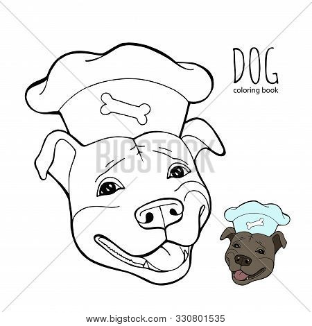 Pit Bull Terrier In A Chefs Cap. Coloring Book Page. Vector Illustration. Vector Logo Pure-bred.