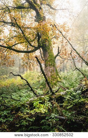 Green Forest In Nature In Autumn. Old Tree In Forest In Autumn. Nature. Rain In Forest. Natural Envi