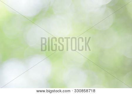 Natural Spring Blurred Green Leaves Background. Create Abstract Green White Light Soft Party In Vint