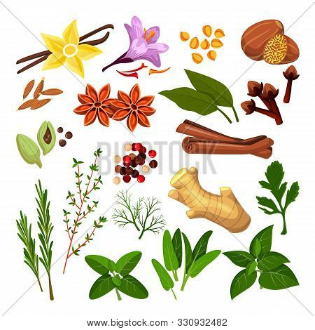 Spices And Herbs Set. Vector Flat Cartoon Illustration, Isolated On White Background. Cinnamon, Pepp
