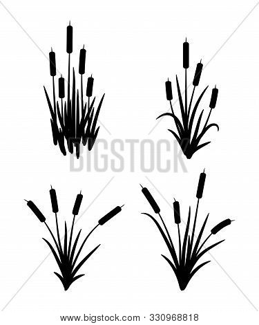 Vector Set Of Typhaceae Marsh Herb With Leaves And Spike Flowers. Black Reed Grass Symbols Isolated