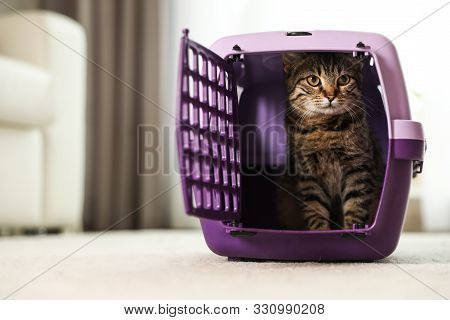 Cute Tabby Cat In Pet Carrier At Home