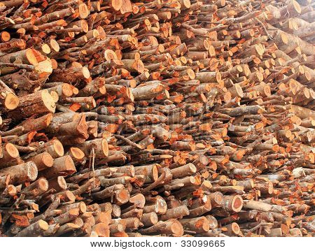 Deforestation- Logs Of Chopped Wood Piled For Sale