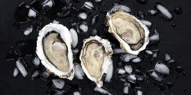 A Panorama Of Fresh Raw Oysters On Ice, Shot From The Top On A Black Background
