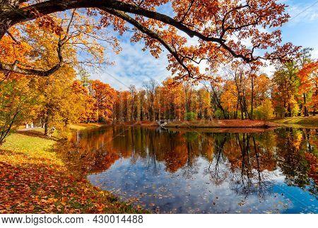 Autumn Foliage In Alexander Park, Tsarskoe Selo (pushkin), St. Petersburg, Russia