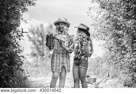 Adorable Girls In Hats Going Planting Plants. Kids Siblings Having Fun At Farm. Eco Farming Concept.