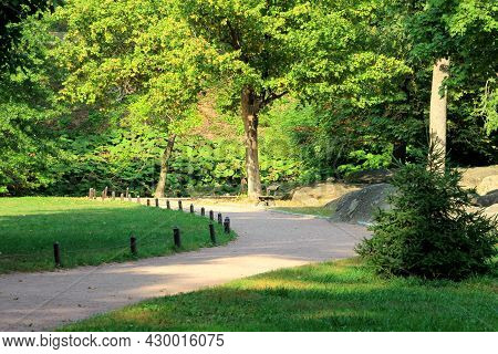 Green Forest Background. Picturesque Deciduous And Coniferous Trees In A Landscaped Park In Uman, Uk