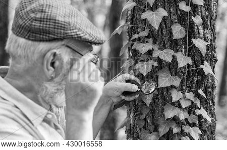 Examine With Magnifying Glass. Magnifying Glass Selective Focus. Old Man Look At Leaves With Magnify