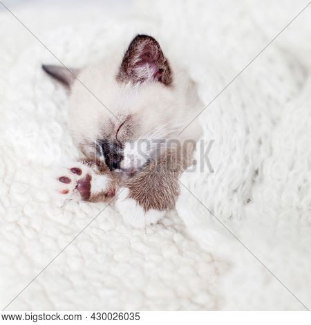 Small cat sleep at home under knitted plaid Kitten sleeping on white blanket