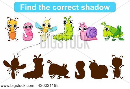 Find Correct Shadow. Kids Educational Game. Set Of Insects To Find The Correct Shadow. Simple Gaming