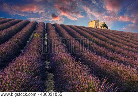 Sun is setting over a beautiful purple lavender filed in Valensole with an old barn on the hill. Provence, France