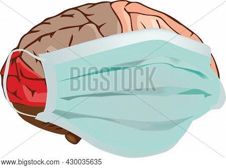 Human Brain Human Brain Organ With Anti Covit Mask Protection 19