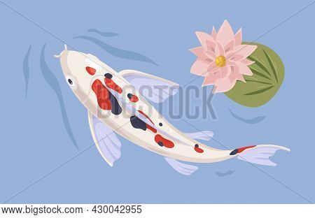 Japanese Koi Swimming In Asian Pond With Waterlily. Japan Fish In Oriental Water Garden With Flower.