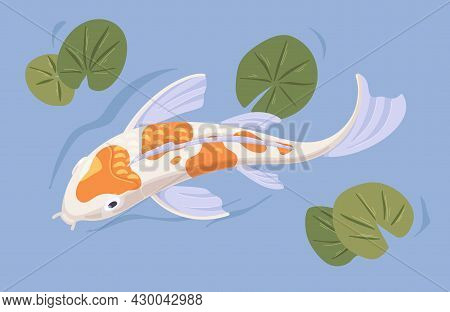 Japanese Koi Swimming In Pond. Asian Decorative Carp In Water With Leaves. Above View Of Chinese Ori