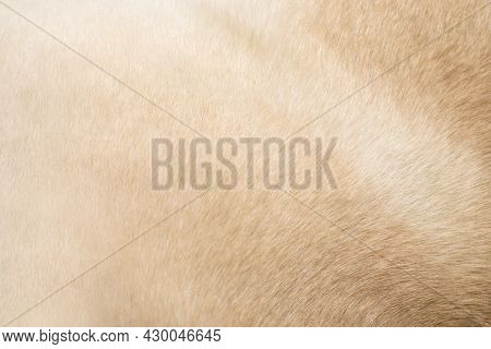 Animal Hair. Background For Themes On The Problems Of Hair, Animal Health.