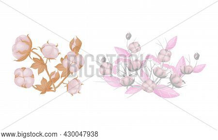 Cotton Plant Branches Set. Flowers Boll Fiber In Opened Seeds Case Vector Illustration